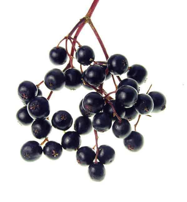 sambucus, elderberry syrup, elderberry extract,